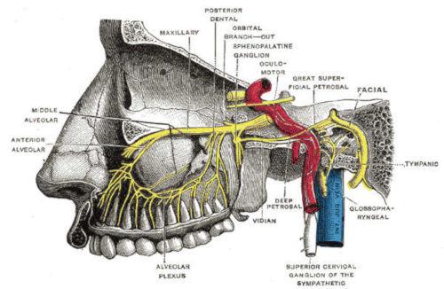 Nervo mascellare