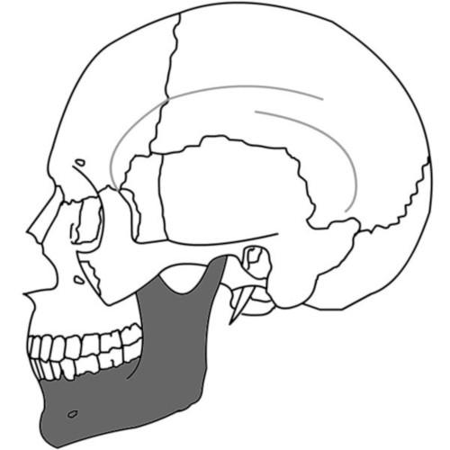 Osso mandibolare