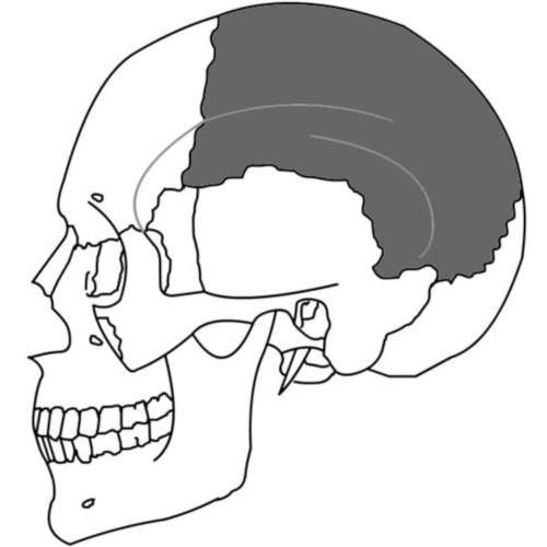 Osso Parietale