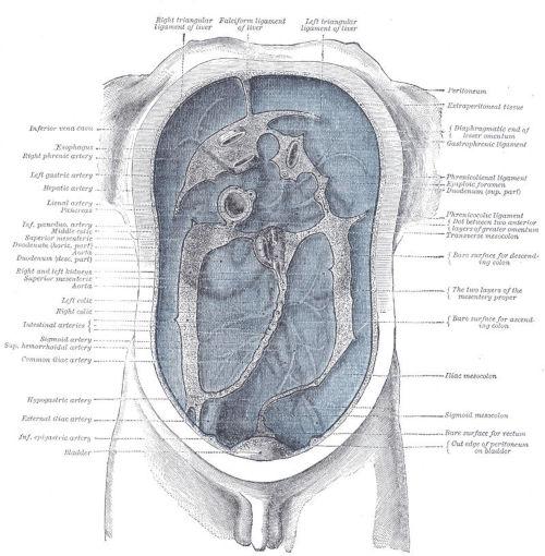 Peritoneo viscerale posteriore