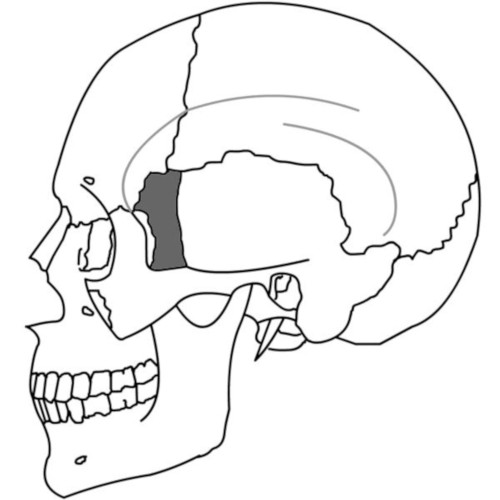 Osso Sfenoide