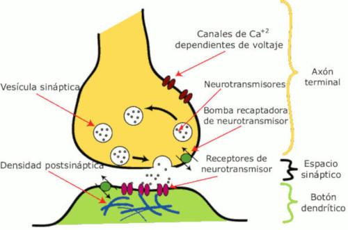 Potenziale di membrana