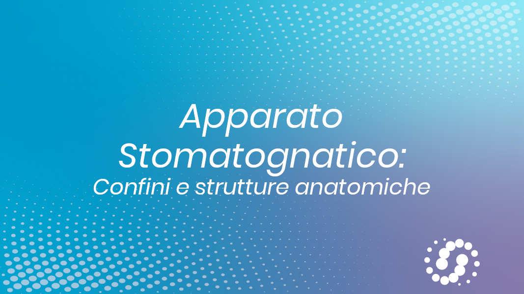 Apparato stomatognatico: Confini e strutture anatomiche