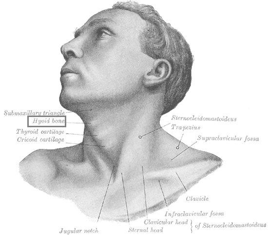 Posizione dell'osso ioide