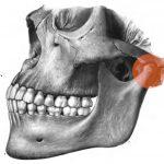 Articolazione temporo-mandibolare – ATM