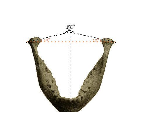 Gradi apertura mandibola