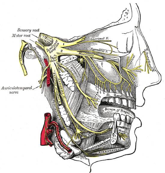 Innervazione articolazione temporo-mandibolare