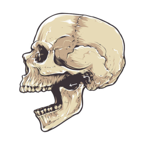 Movimento articolazione temporo-mandibolare