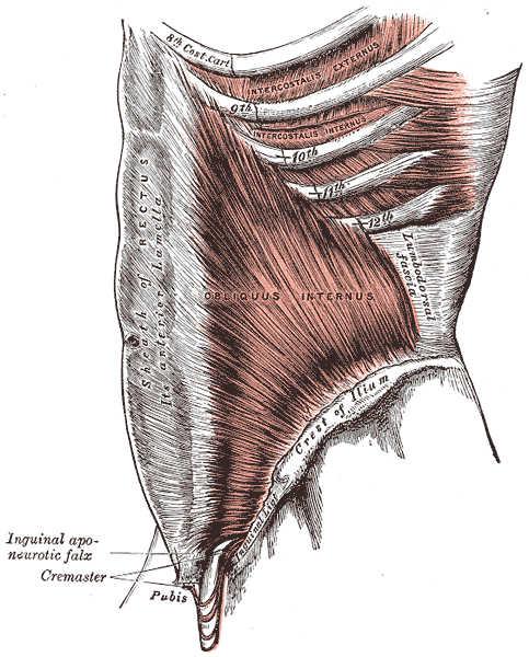 sistema tensegrile fascia muscolare