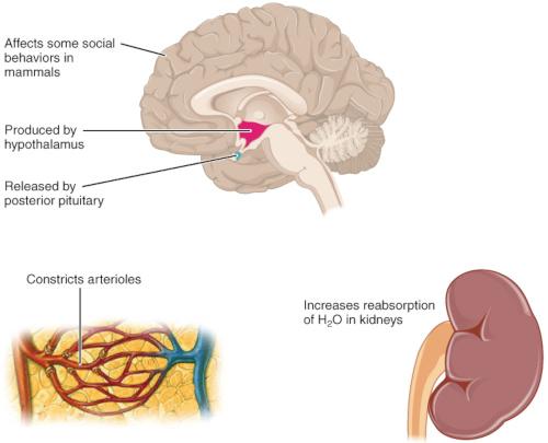 Azione della vasopressina