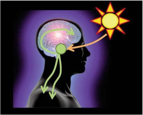 Regolazione ritmi circadiani