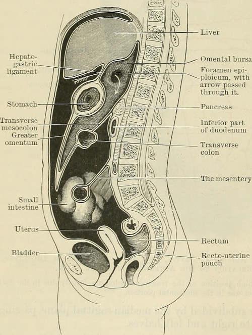 Colonna vertebrale e intestino